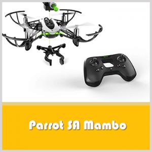 Parrot SA Mambo